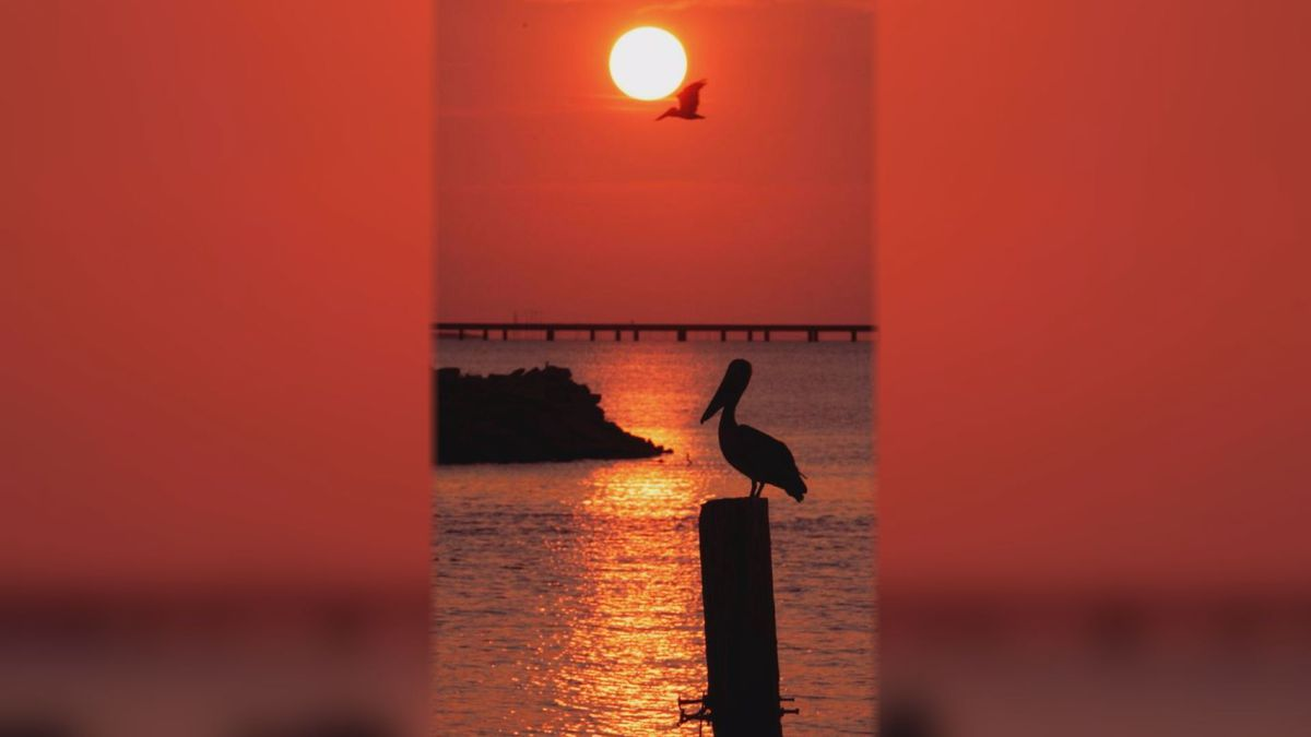 The state bird of Louisiana, the Brown Pelican, is silhouetted against the setting sun on Lake Pontchartrain in New Orleans on Thursday, Aug. 23, 2007. | Source: AP Photo / Ann Heisenfelt