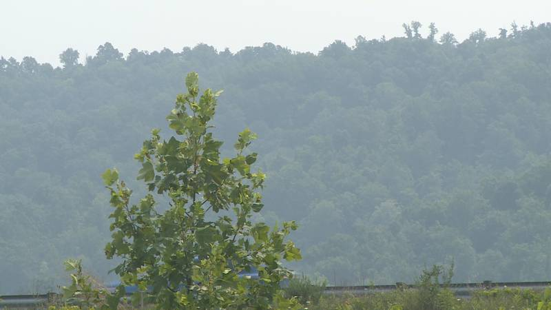 The National Weather Service in Charleston said the smoke is affecting air quality, minor...