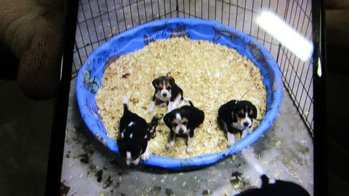 Troopers with Kentucky State Police are investigating the theft of a litter of puppies in...