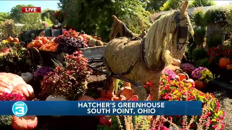 Hatcher's Greenhouse fall display