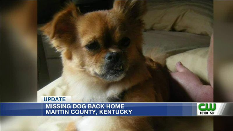 Lost dog finally back home