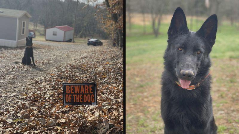 German Shepherd, Kaiser, shot and killed in Allen County.