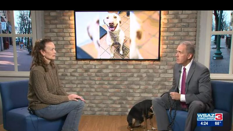 Courtney Proctor Cross, Executive Director, and Roxy share the importance of microchipping and...