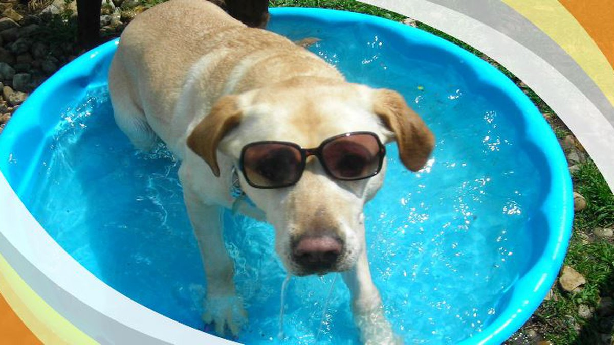 Dog day-like heat this weekend