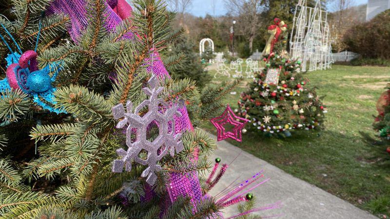 87 Christmas Trees line Madison Street to Main Street Park in Louisa, Kentucky