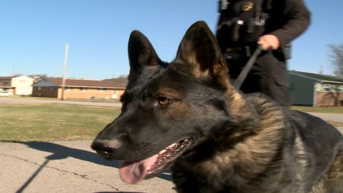 Ammo, a one-year-old German Shepherd, is working to get drugs off the streets in South Point, Ohio.