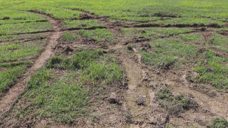 Aaron Wood said some of the ruts in the field are three inches deep.