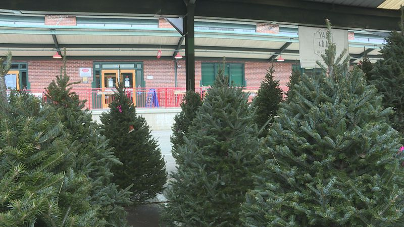 Christmas trees arrived at Capitol Market this week.