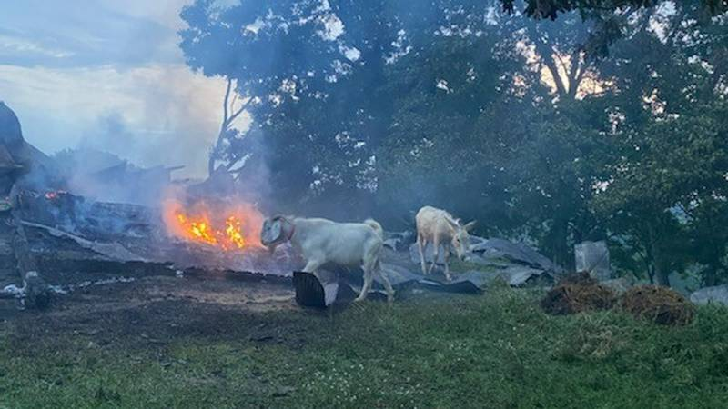 A fire in the Putnam County community of Red House destroyed a barn, but the animals made it...