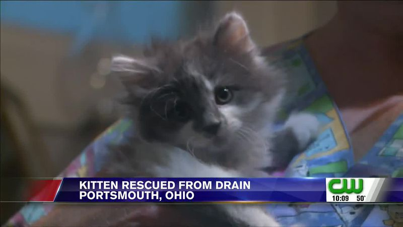 Neighbors rallied to rescue a kitten from storm drain in Portsmouth, Ohio.