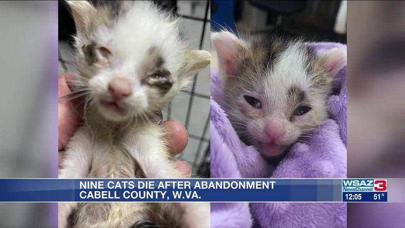 9 kittens dead after 44 abandoned last week at shelter