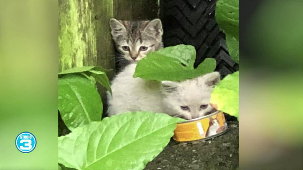 These kittens inspired the children's book 'Kittens, Flowers, and Onion Soup!'