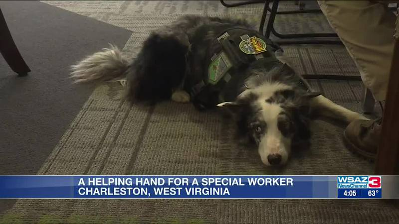 Yeager Airport canine expected to get a helping hand